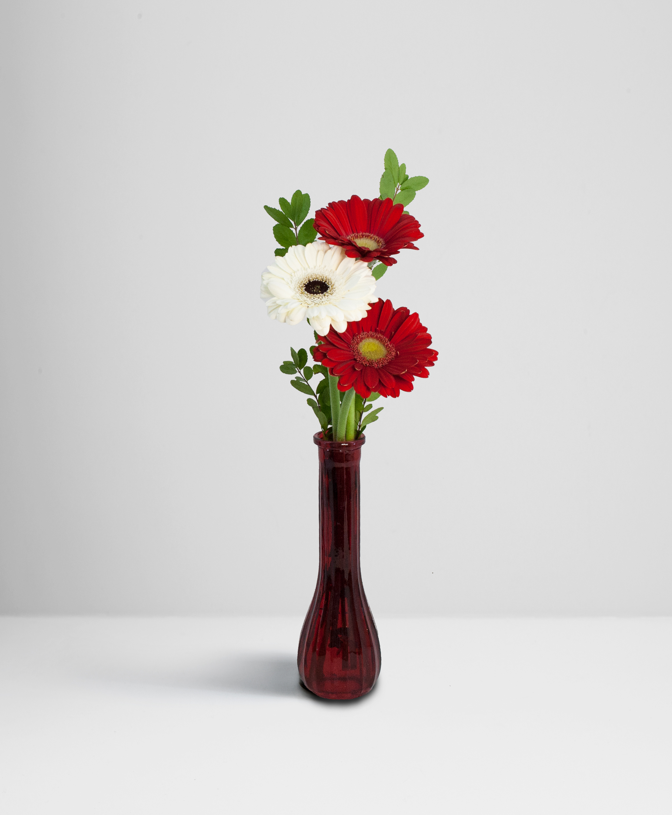 Carambole (Red) & Iceberg (White) Cut Gerbera in Frosted Red Bud Vase
