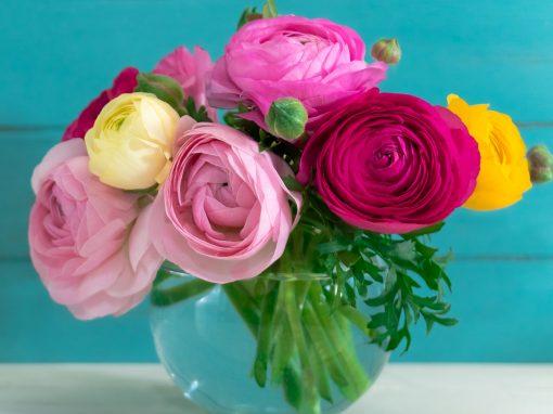 Romance Ranunculus
